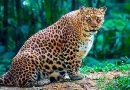 Mielumo dozė: apvalutės būsimosios mamytės iš gyvūnijos pasaulio (foto)