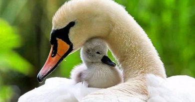 Mama yra svarbiausia mūsų gyvenimo grandis. Pažvelkite į šias mielas fotografijas
