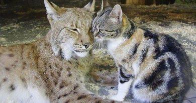 Valkataujantis kačiukas susirado draugą zoologijos sode