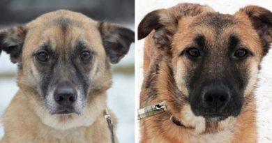 Du neišskiriami šunys atsidūrė gatvėje, kadangi tapo nereikalingi šeimininkams