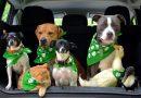 Septynių gyvūnų gyvybės buvo išgelbėtos