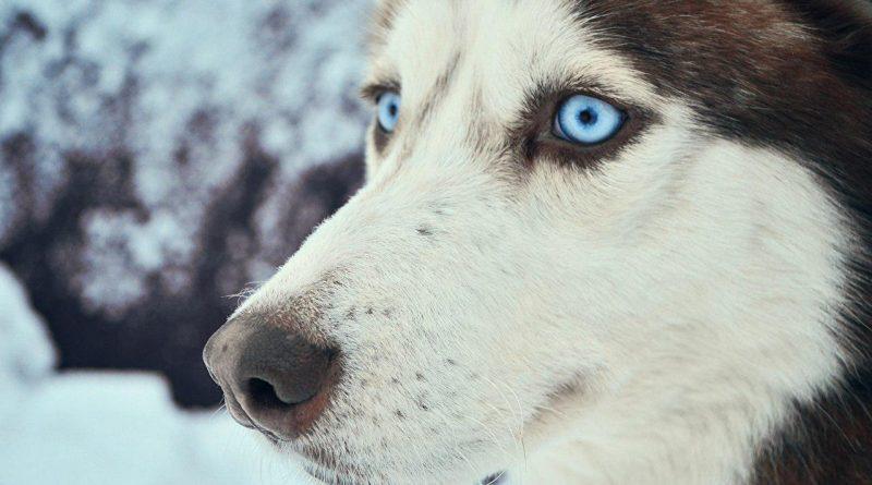 Nuostabaus grožio šuo pats atėjo pasiprašyti į prieglaudą