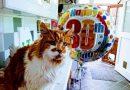 Šis katinėlis švenčia savo trisdešimtmetį