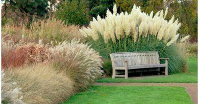 Auga daug metų, reikalauja minimaliai trąšų ir priežiūros! Grūdiniai augalai: visais laikais, visais sezonais