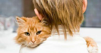 Nepageidaujamas rudas katinas tapo savo šeimininkų berniuko apsaugininku