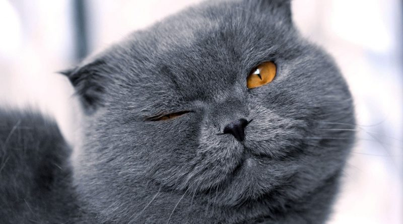 Močiutė atnešė pas veterinarus katę ir pasiskundė, kad ji gimdo kiekvieną mėnesį