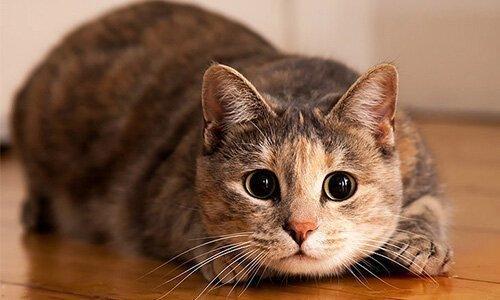 8 įdomūs faktai apie kates, po kurių jūs pamilsite jas dar labiau