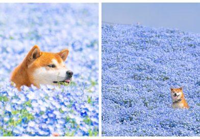 21 šio šuns fotografijų tikrai padarys jus neilgam laimingais