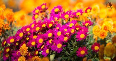 7 augalai, gebantys apsaugoti jus nuo erkių, musių, uodų