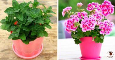 8 gydantys kambariniai augalai, kurie sugrąžina gyvybines jėgas