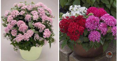 Beprotiškai graži ir įdomi gėlė mano namuose kelia susižavėjimą svečiams