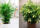 7 geriausi kambariniai augalai patalpos oro valymui. Pasirinkite kelis augalus ir kvėpuokite lengvai