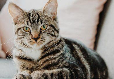 Pagrindinės kačių ir katinų šeimininkų klaidos